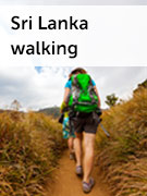 Sri Lanka walking