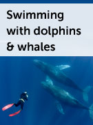Swimming with whales and wild dolphins