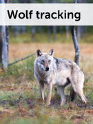 Wolf tracking