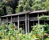 Longhouse homestays