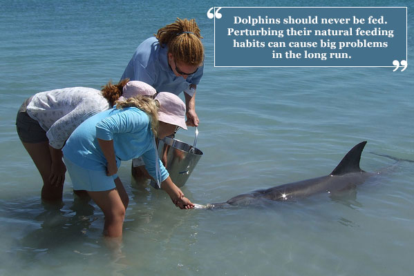 Never feed wild dolphins