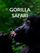 Gorilla safari travel guide