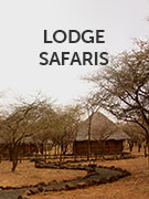 Lodge safari