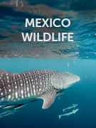 Mexico wildlife
