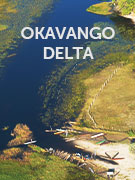 Okavango Delta travel guide