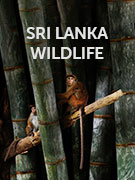 Sri Lanka wildlife