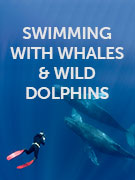 Swimming with whales & wild dolphins