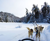 Dog sledding in the Yukon