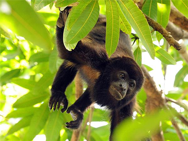 Costa Rica wildlife holiday, Coastal Secrets