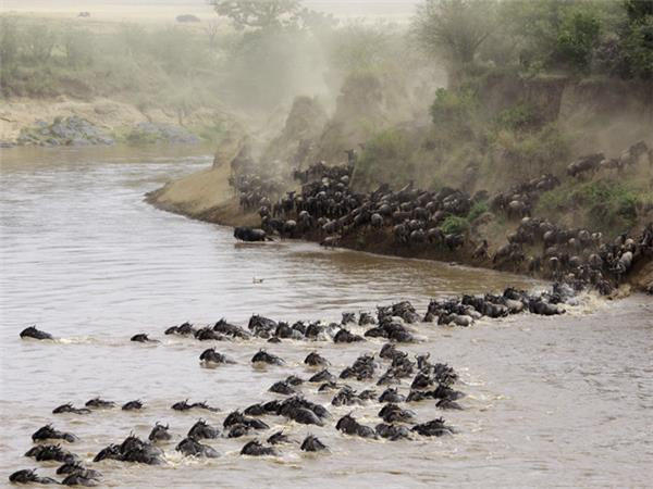 East Africa adventure vacation, safari, gorillas & beach