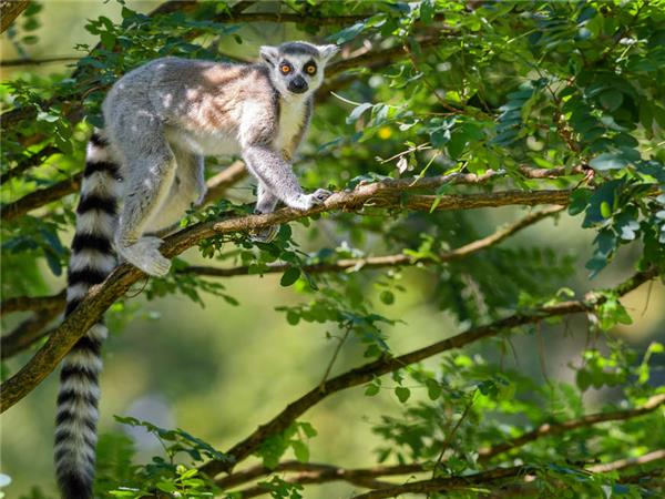 Madagascar vacations, The lost continent