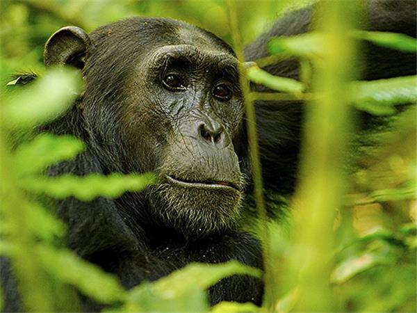 Uganda gorillas and wildlife vacation