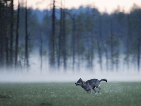 Finland wildlife vacation in Wild Taiga