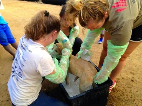 Veterinary internship in Chintsa, South Africa