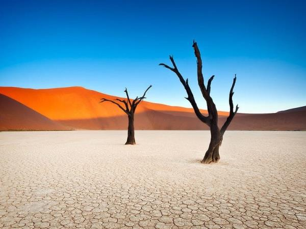 Namibia safari and vacation