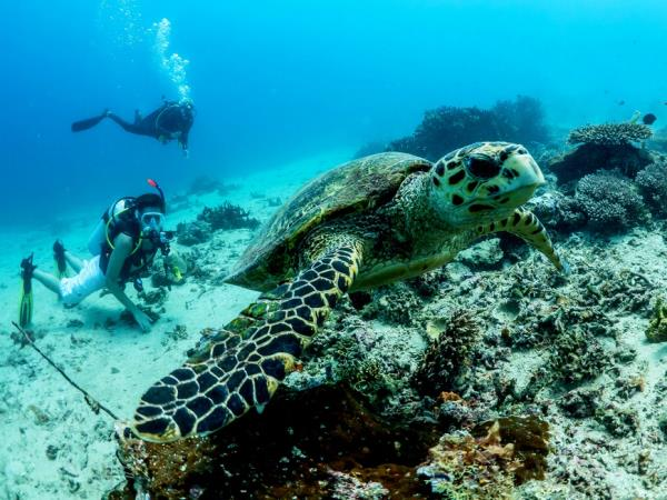 Mozambique marine conservation with PADI course