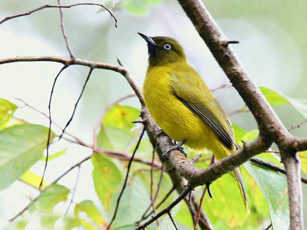Andaman Islands India Bird watching vacations