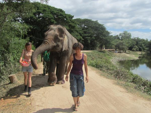 Wildlife rescue volunteering in Thailand, under 18s