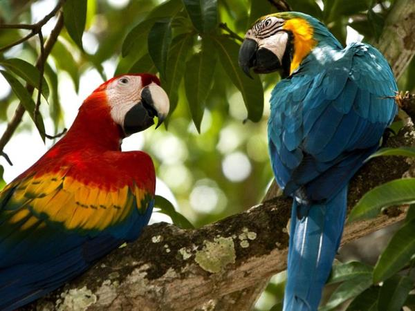 Amazon birding and wildlife vacation, Ecuador