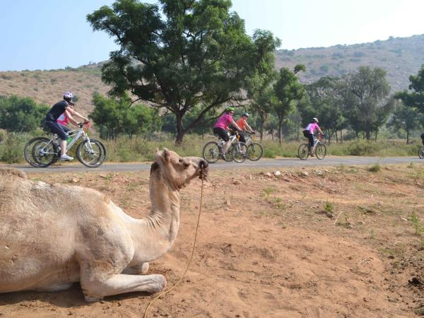 Rajasthan biking tour