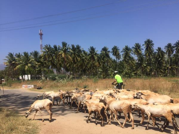 South India cycling tour, coast to coast