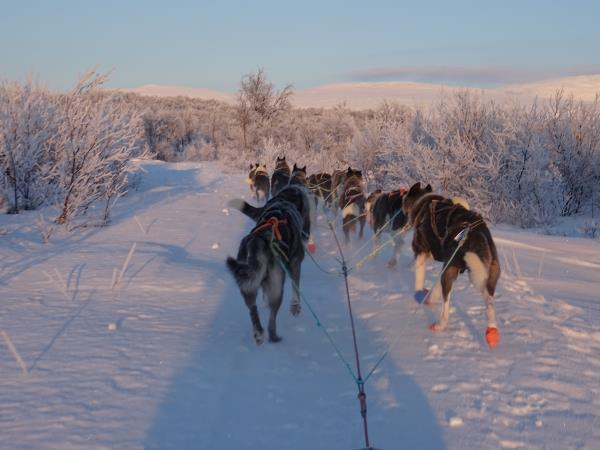 Northern Lights and dog sledding vacation, Norway