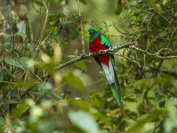 Guatemala and Belize Birdwatching small group tour