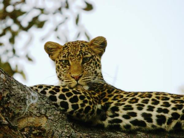Southern Tanzania luxury safari vacation