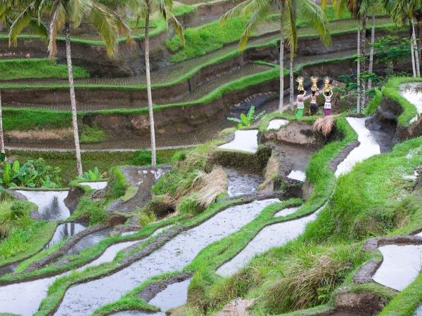 Bali vacations on a shoestring