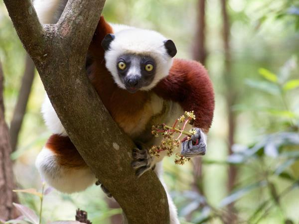 Madagascar trekking vacation