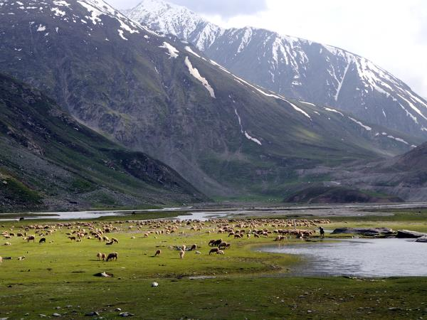 Walking holiday in India, Ladakh & Kashmir