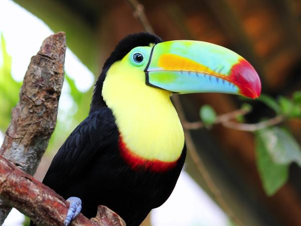 Complete tailor made tour of Costa Rica