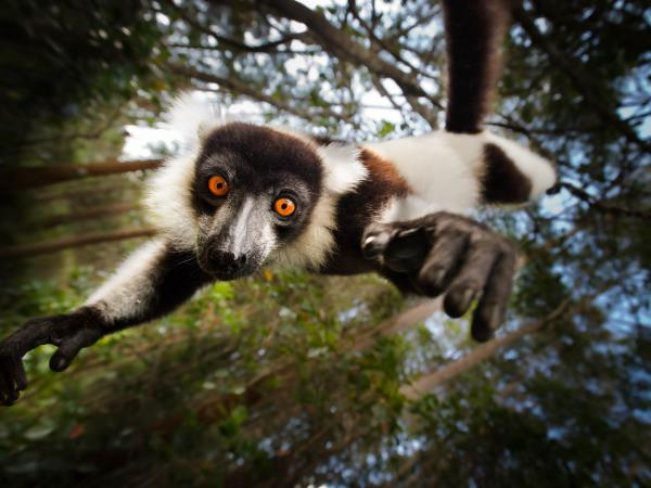 Madagascar vacations, island adventure