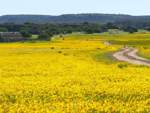 South Africa walking amongst wild flowers vacation