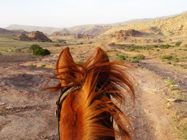 Jordan horse riding vacation