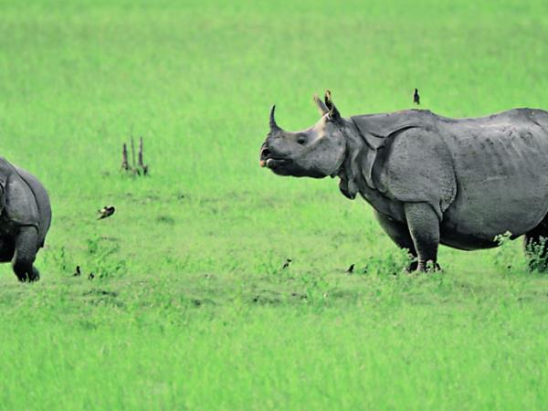 India wildlife safari tour of Kaziranga