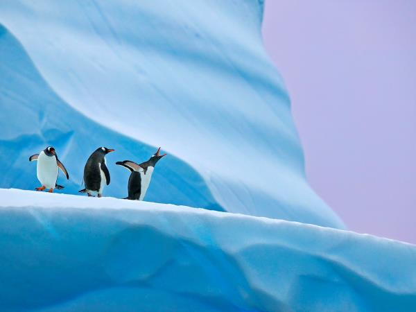 Antarctica photography cruise