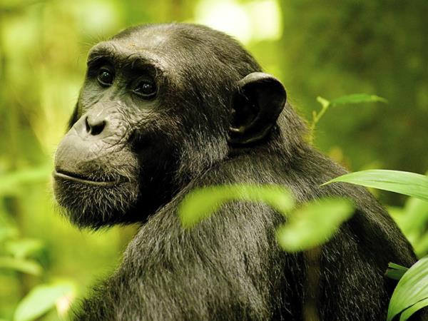 Uganda highlights & mountain gorillas tour