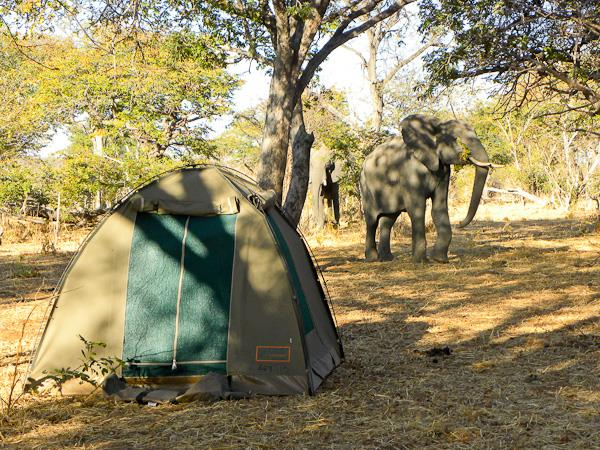 Botswana safari and wild camping