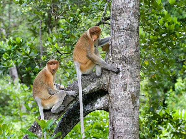 Best of Borneo vacation, tailor made