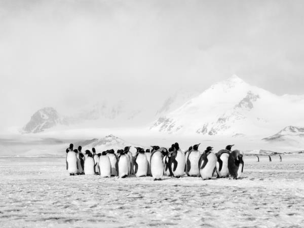 Antarctica expedition, crossing the antarctic circle
