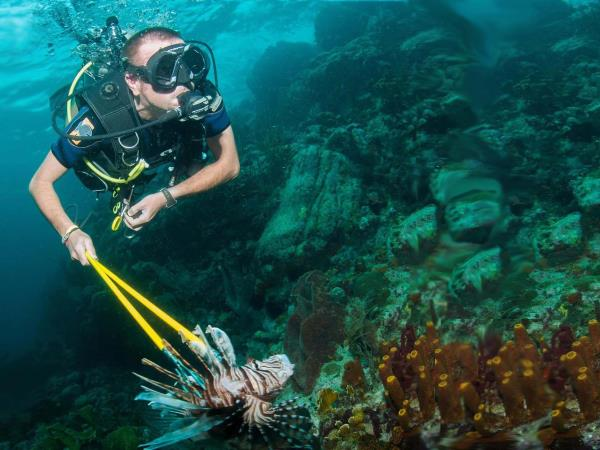 Caribbean Lionfish hunting in Carriacou, Grenada