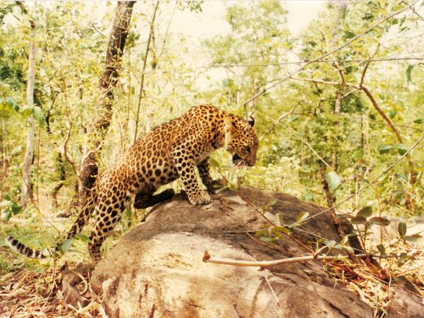 Endangered wildlife tour in India