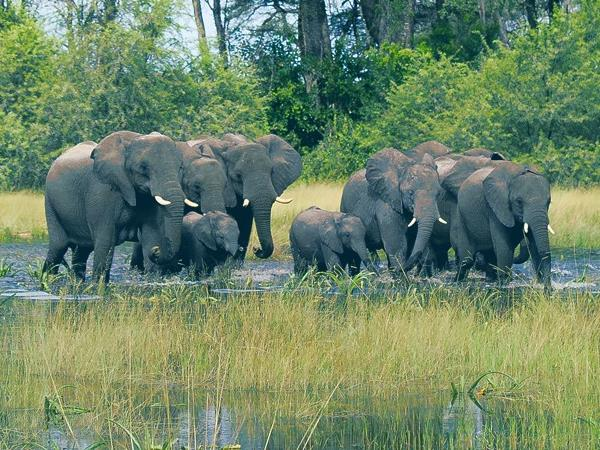 Botswana flying safari and Victoria Falls