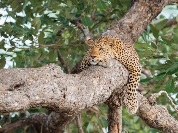 South Luangwa photographic safari in Zambia