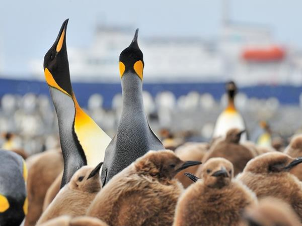 Falklands, South Georgia and Antarctica cruise
