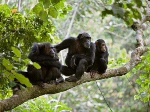 Rwanda chimp safari 3 day tour