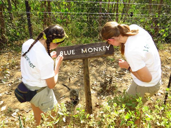 Wildlife volunteering in Malawi, with Zambia safari