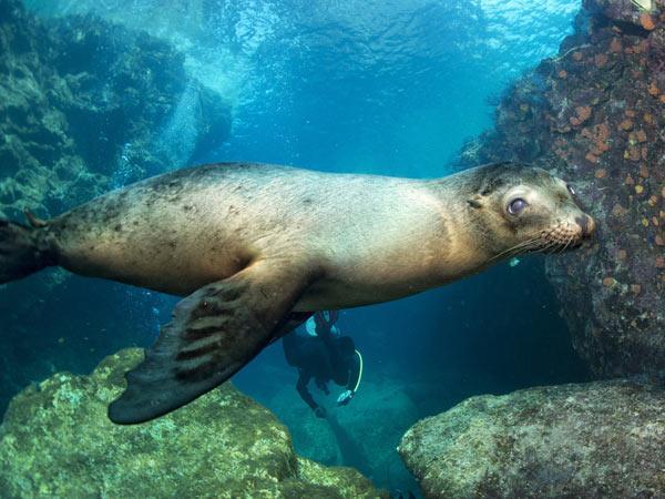 Galapagos Islands Vacations Vacations Vacations In Galapagos - Galapagos vacations