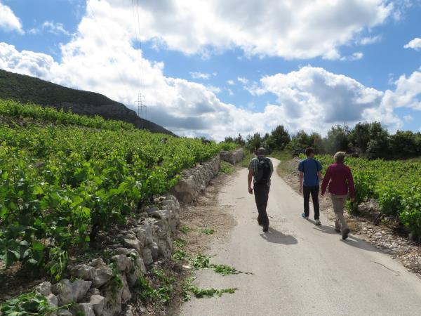 Walking and wine tasting vacation in Dubrovnik, Croatia